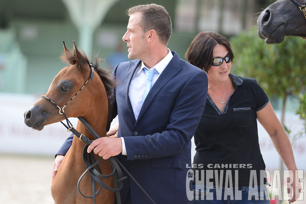 2019 French Championship of Purebred Arabian Horses